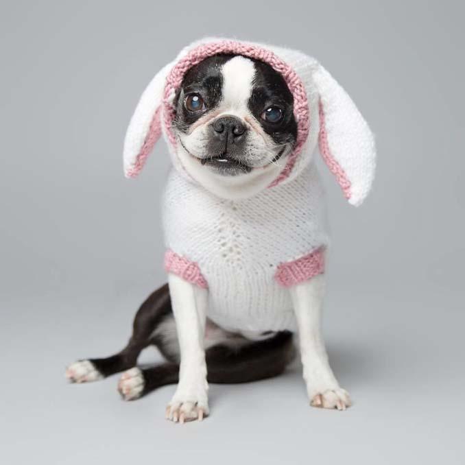 Τα απίθανα πορτραίτα ενός φωτογράφου σκύλων που ειδικεύεται στις αστείες γκριμάτσες (12)