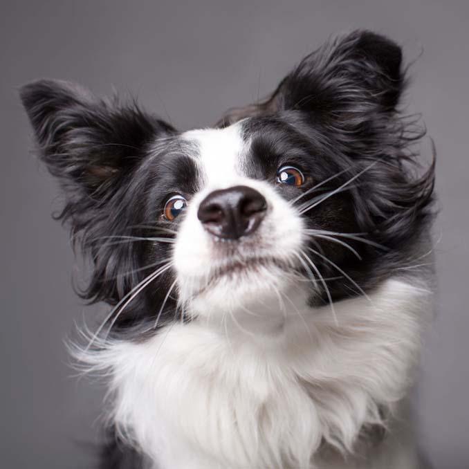 Τα απίθανα πορτραίτα ενός φωτογράφου σκύλων που ειδικεύεται στις αστείες γκριμάτσες (14)