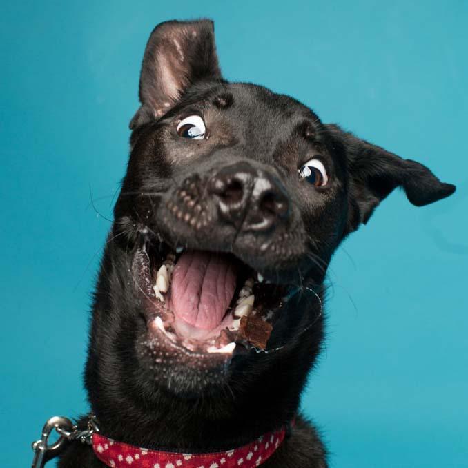 Τα απίθανα πορτραίτα ενός φωτογράφου σκύλων που ειδικεύεται στις αστείες γκριμάτσες (17)