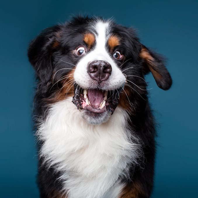 Τα απίθανα πορτραίτα ενός φωτογράφου σκύλων που ειδικεύεται στις αστείες γκριμάτσες (18)