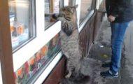 Γάτες που... κάνουν τα δικά τους! #44 (1)