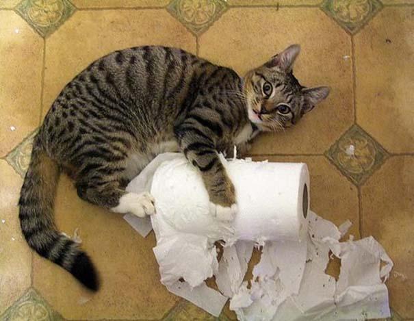 Γάτες που... κάνουν τα δικά τους! #45 (2)