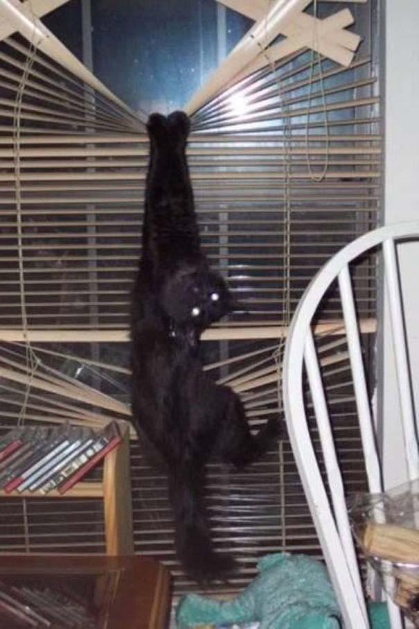 Γάτες που... κάνουν τα δικά τους! #45 (3)