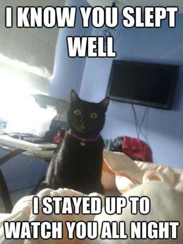 Γάτες που... κάνουν τα δικά τους! #45 (5)