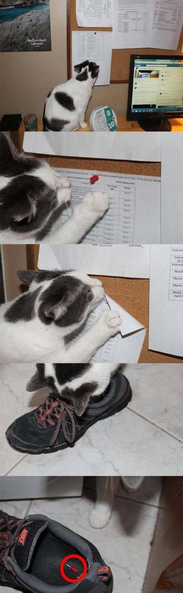 Γάτες που... κάνουν τα δικά τους! #45 (9)