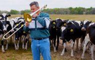 Ποιος θα το φανταζόταν πως οι αγελάδες λατρεύουν την τζαζ μουσική
