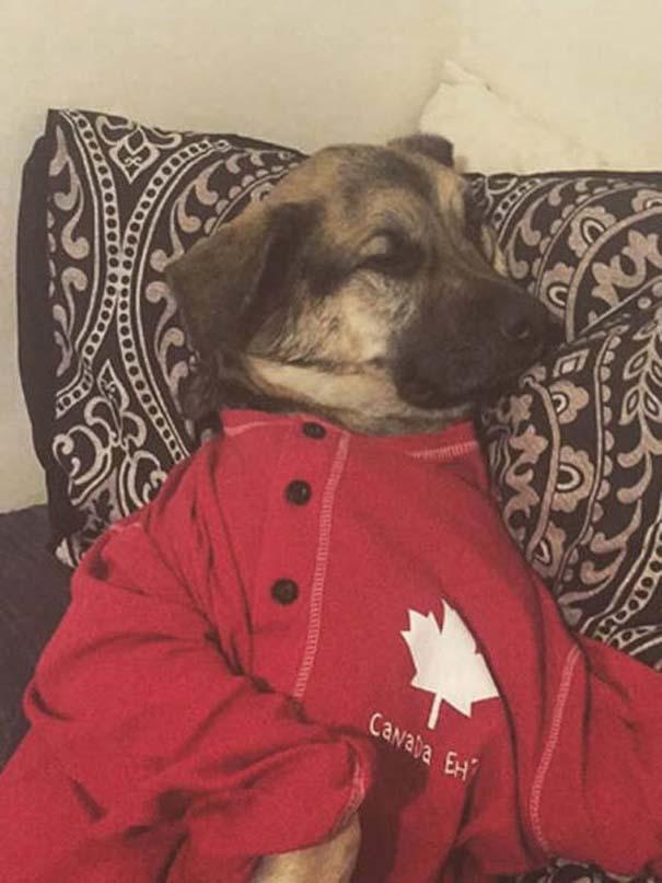 Εν τω μεταξύ, στον Καναδά... #22 (10)
