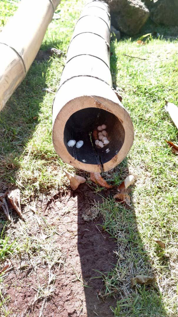 Έκανε εργασίες στον κήπο του, όταν ήρθε αντιμέτωπος με σπάνια γεννητούρια (1)