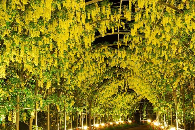 Το Φεστιβάλ με τις Γλυτσίνιες στην Ιαπωνία είναι κάτι σαν παράδεισος επί Γης (17)