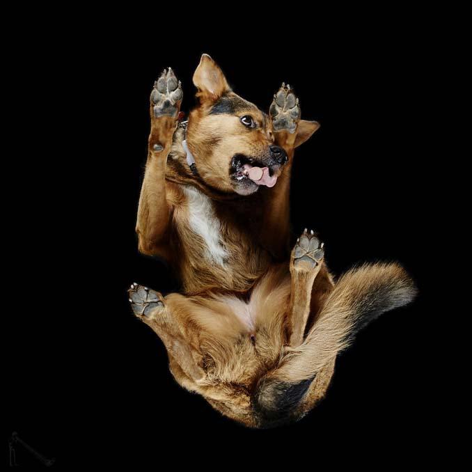 Φωτογραφίζοντας σκύλους... από κάτω (2)