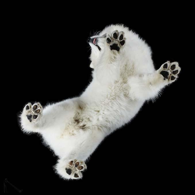 Φωτογραφίζοντας σκύλους... από κάτω (4)
