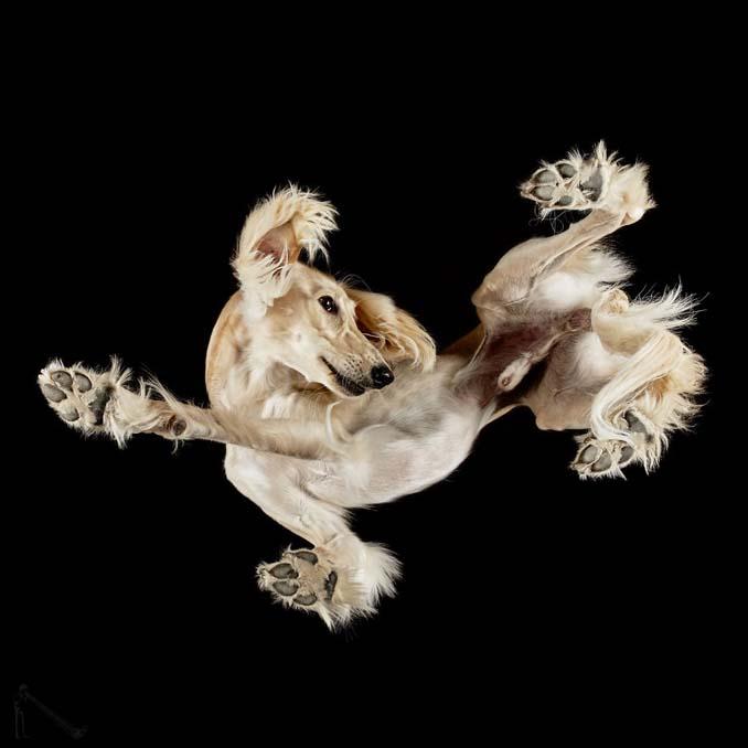Φωτογραφίζοντας σκύλους... από κάτω (5)