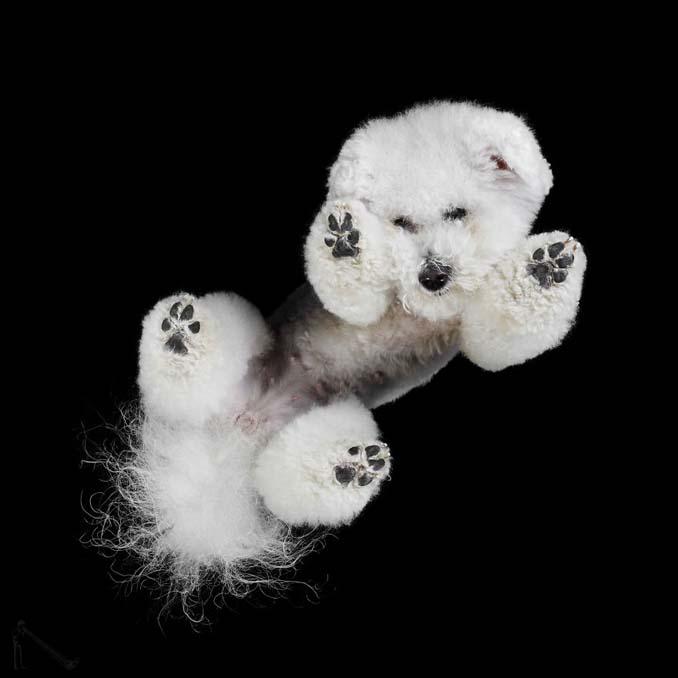 Φωτογραφίζοντας σκύλους... από κάτω (6)