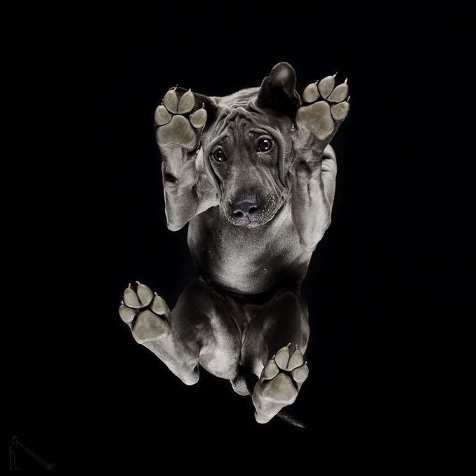 Φωτογραφίζοντας σκύλους... από κάτω (7)