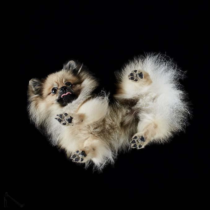 Φωτογραφίζοντας σκύλους... από κάτω (8)