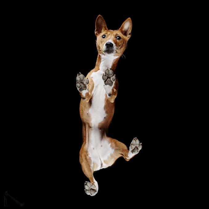 Φωτογραφίζοντας σκύλους... από κάτω (11)