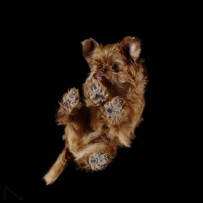 Φωτογραφίζοντας σκύλους... από κάτω (14)