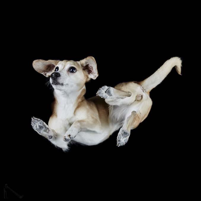 Φωτογραφίζοντας σκύλους... από κάτω (16)