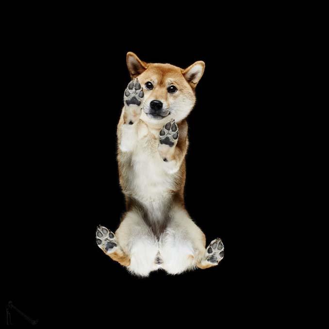 Φωτογραφίζοντας σκύλους... από κάτω (19)