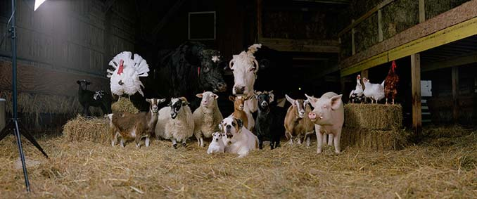 Φωτογραφίζοντας τα ζώα της φάρμας έτσι όπως δεν τα έχετε ξαναδεί (11)