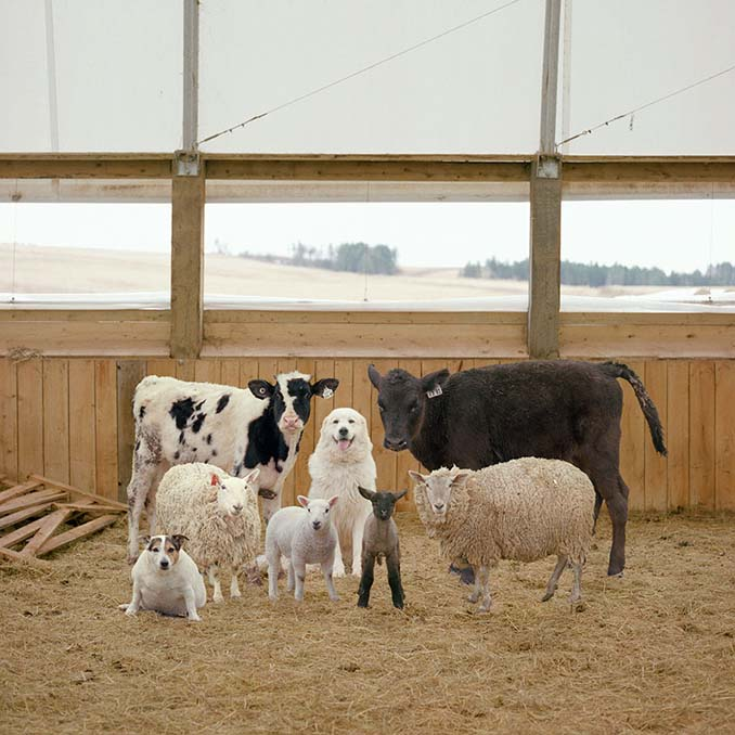 Φωτογραφίζοντας τα ζώα της φάρμας έτσι όπως δεν τα έχετε ξαναδεί (12)