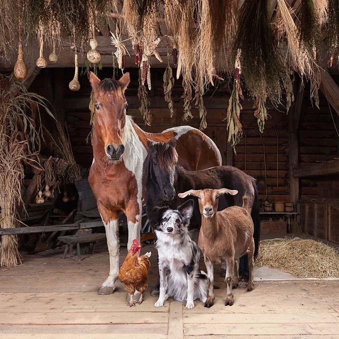 Φωτογραφίζοντας τα ζώα της φάρμας έτσι όπως δεν τα έχετε ξαναδεί (17)