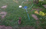 Γάτα παίζει κυνηγητό με κουνέλι