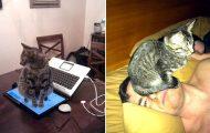 Γάτες που... κάνουν τα δικά τους! #46 (2)
