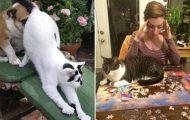Γάτες που... κάνουν τα δικά τους! #47 (5)