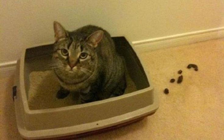 Γάτες που... κάνουν τα δικά τους! #48 (1)