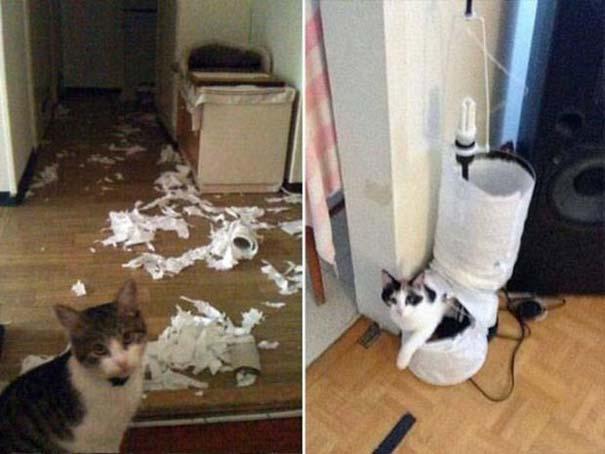 Γάτες που... κάνουν τα δικά τους! #48 (2)