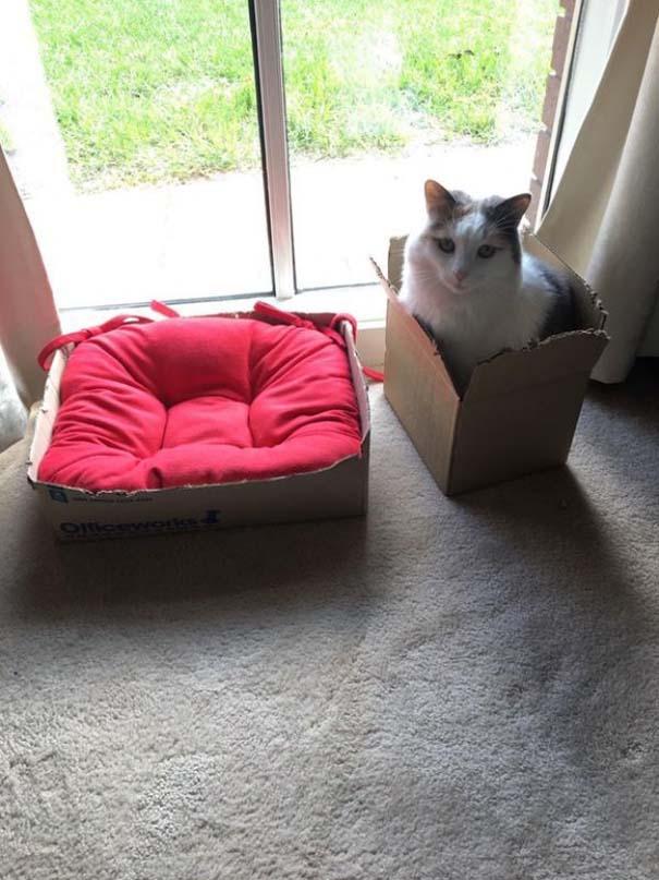 Γάτες που... κάνουν τα δικά τους! #48 (4)