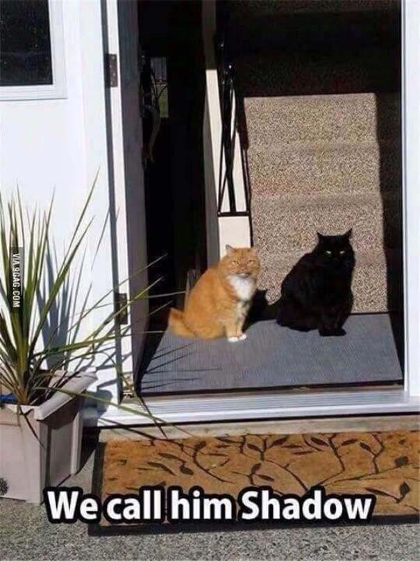 Γάτες που... κάνουν τα δικά τους! #48 (5)
