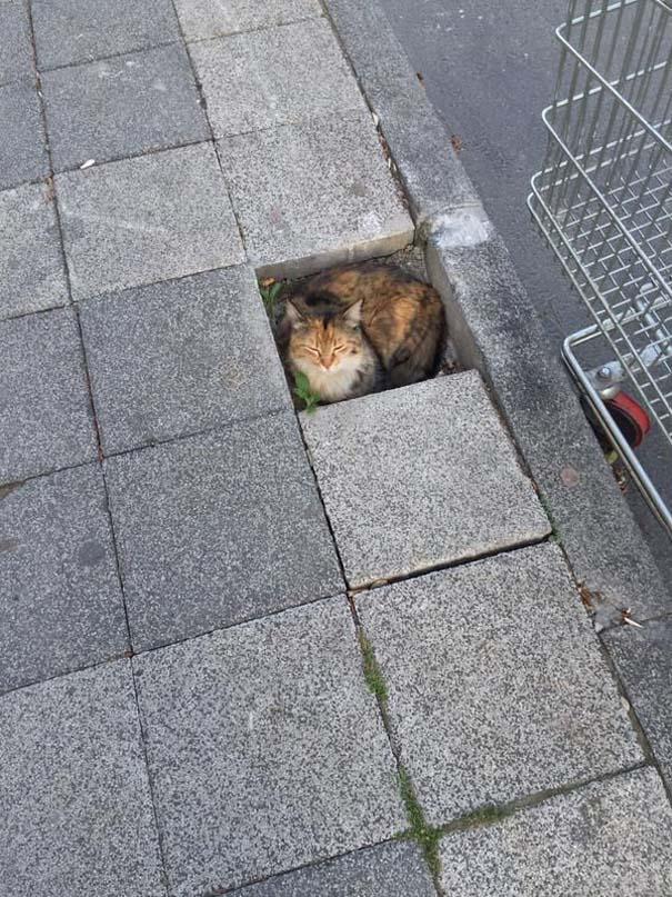 Γάτες που... κάνουν τα δικά τους! #48 (8)