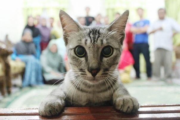 Όταν οι γάτες κάνουν Photobombing (4)