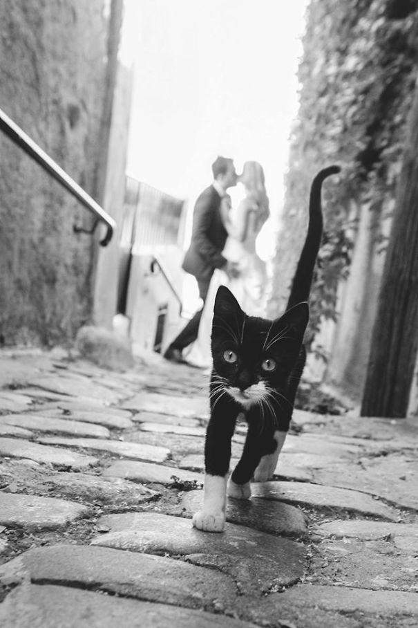 Όταν οι γάτες κάνουν Photobombing (6)