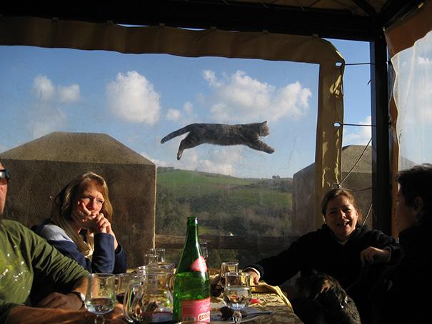 Όταν οι γάτες κάνουν Photobombing (7)