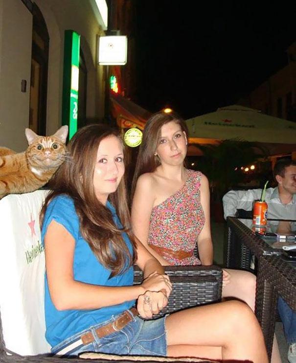 Όταν οι γάτες κάνουν Photobombing (11)