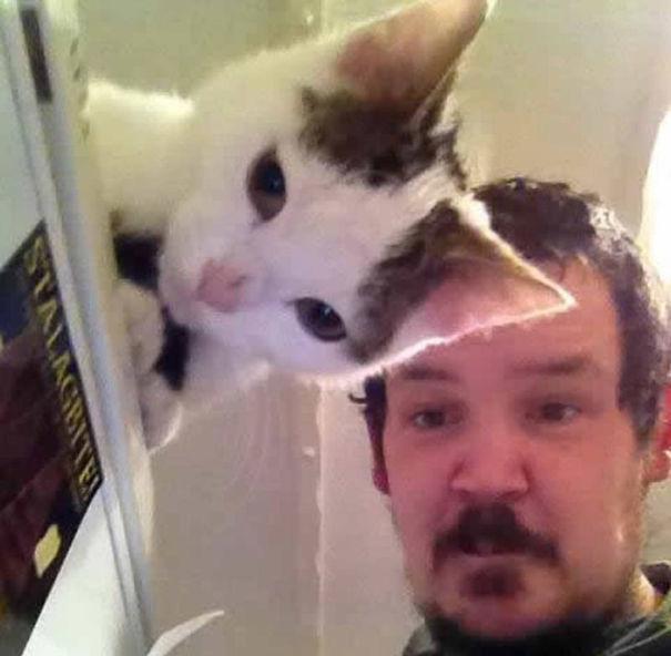 Όταν οι γάτες κάνουν Photobombing (14)