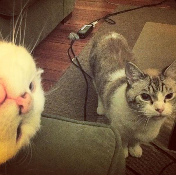 Όταν οι γάτες κάνουν Photobombing (16)