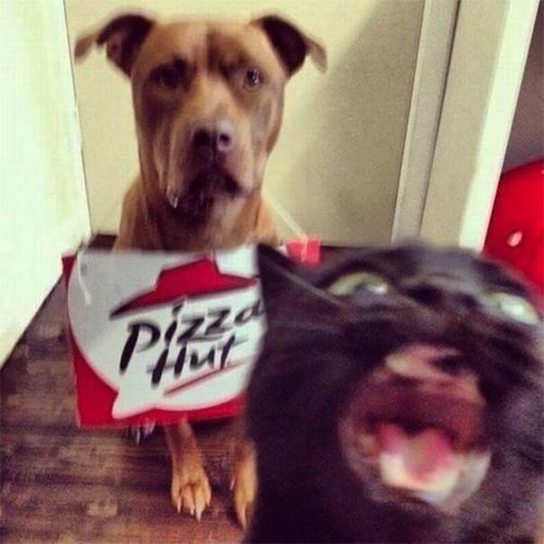Όταν οι γάτες κάνουν Photobombing (20)