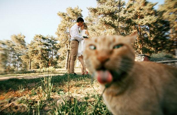 Όταν οι γάτες κάνουν Photobombing (22)