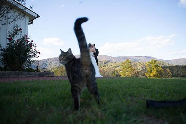 Όταν οι γάτες κάνουν Photobombing (23)
