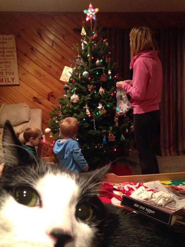 Όταν οι γάτες κάνουν Photobombing (25)