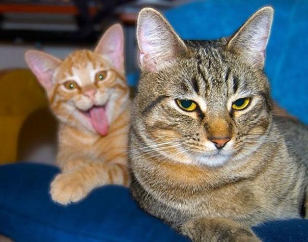 Όταν οι γάτες κάνουν Photobombing (28)