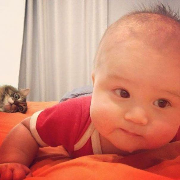 Όταν οι γάτες κάνουν Photobombing (29)
