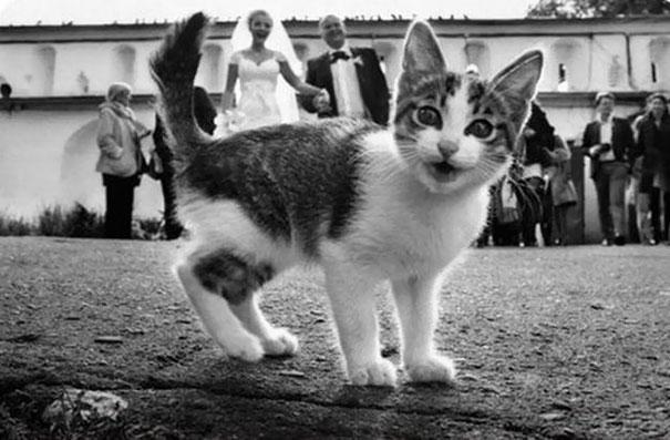 Όταν οι γάτες κάνουν Photobombing (30)