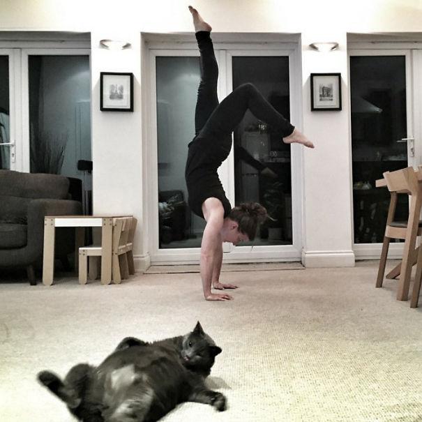 Όταν οι γάτες κάνουν Photobombing (33)