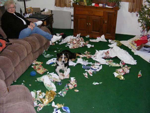 Κατοικίδια που μεταμορφώθηκαν σε καταστροφέα μόλις έμειναν για λίγο μόνα στο σπίτι (8)