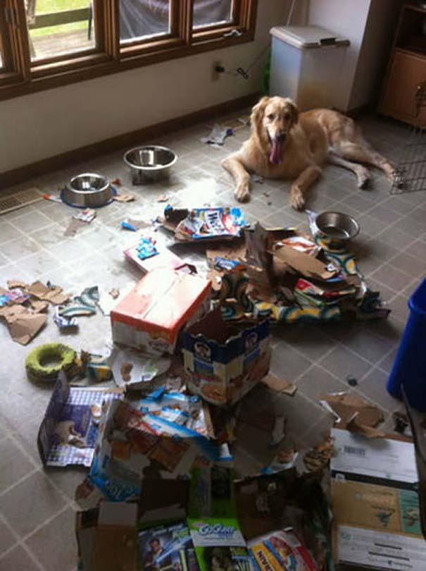 Κατοικίδια που μεταμορφώθηκαν σε καταστροφέα μόλις έμειναν για λίγο μόνα στο σπίτι (15)